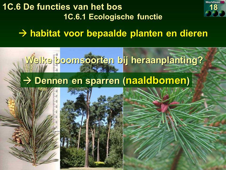 habitat voor bepaalde planten en dieren Welke boomsoorten bij heraanplanting.