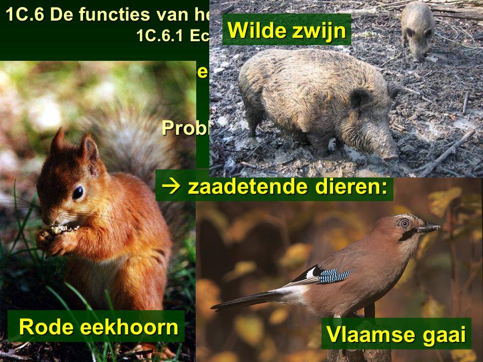 1C.6 De functies van het bos 1C.6.1 Ecologische functie 19  habitat voor bepaalde planten en dieren Rode eekhoorn Rode eekhoorn Vlaamse gaai Problemen voor.