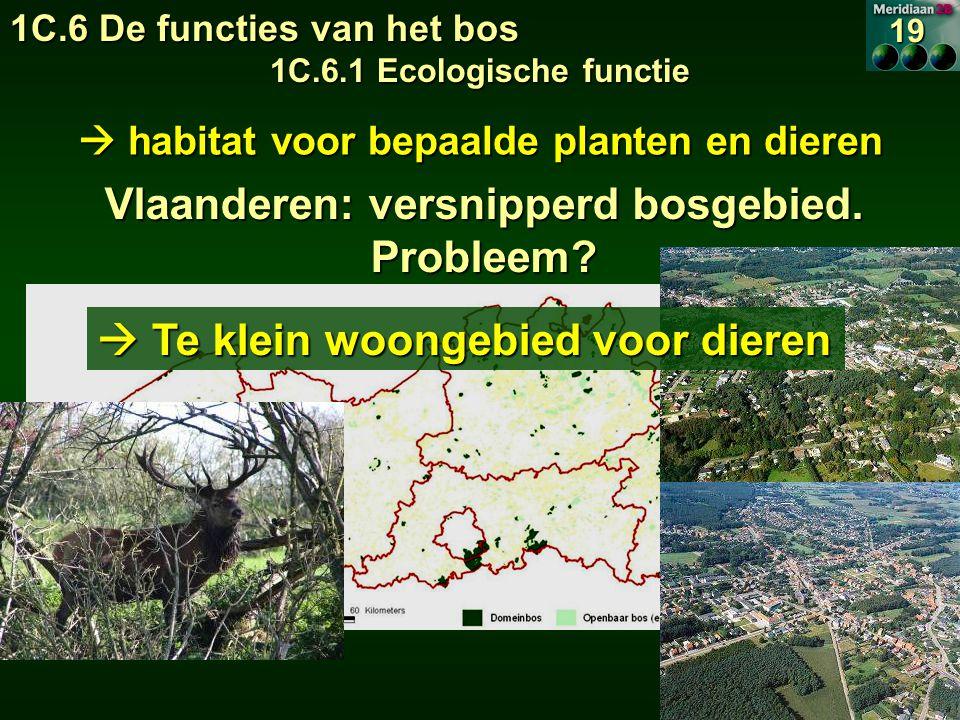  habitat voor bepaalde planten en dieren Vlaanderen: versnipperd bosgebied.