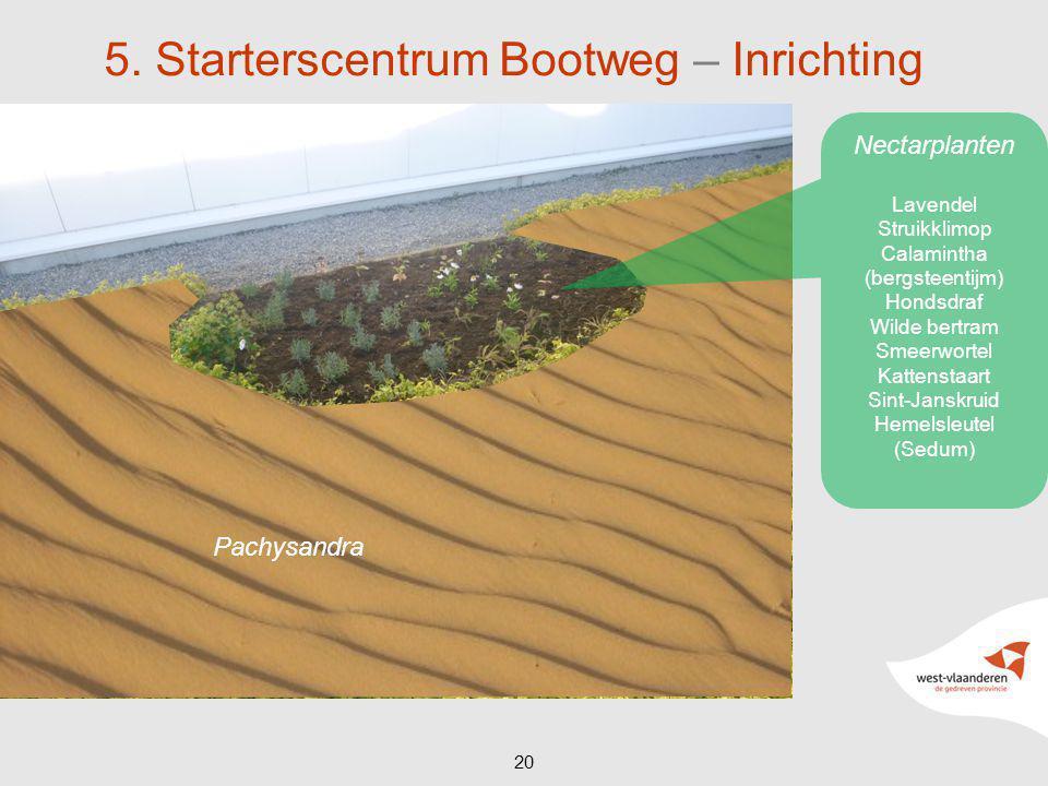 20 5. Starterscentrum Bootweg – Inrichting Pachysandra Nectarplanten Lavendel Struikklimop Calamintha (bergsteentijm) Hondsdraf Wilde bertram Smeerwor