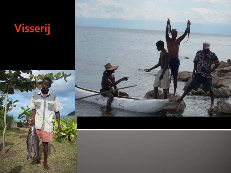  HIV/aids  Malaria  Blaastumoren tgv Bilharzia  Darm problemen tgv dagelijks voedsel  Waterhoofdjes  Open ruggetjes  Gezichtstumoren  Verkeersongelukken  Tuberculose; open en gesloten (bot/wervelkolom)
