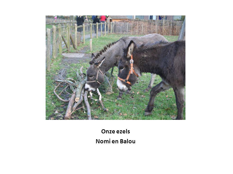 Onze ezels Nomi en Balou