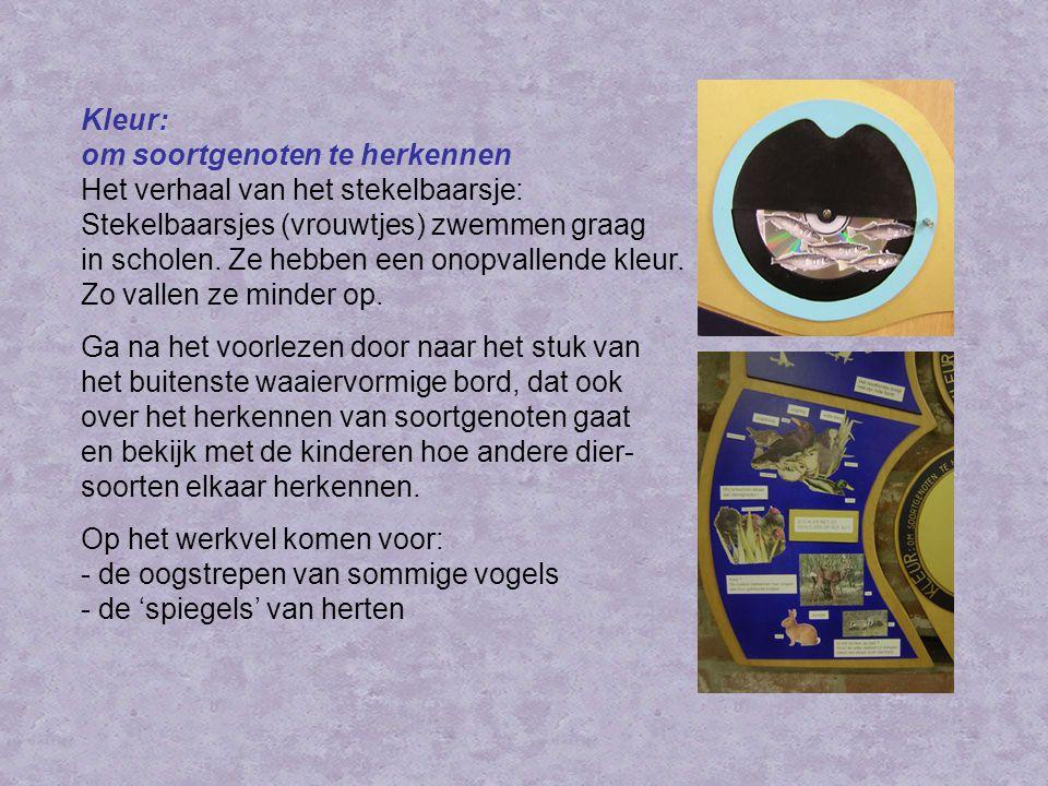 Kleur: om soortgenoten te herkennen Het verhaal van het stekelbaarsje: Stekelbaarsjes (vrouwtjes) zwemmen graag in scholen. Ze hebben een onopvallende