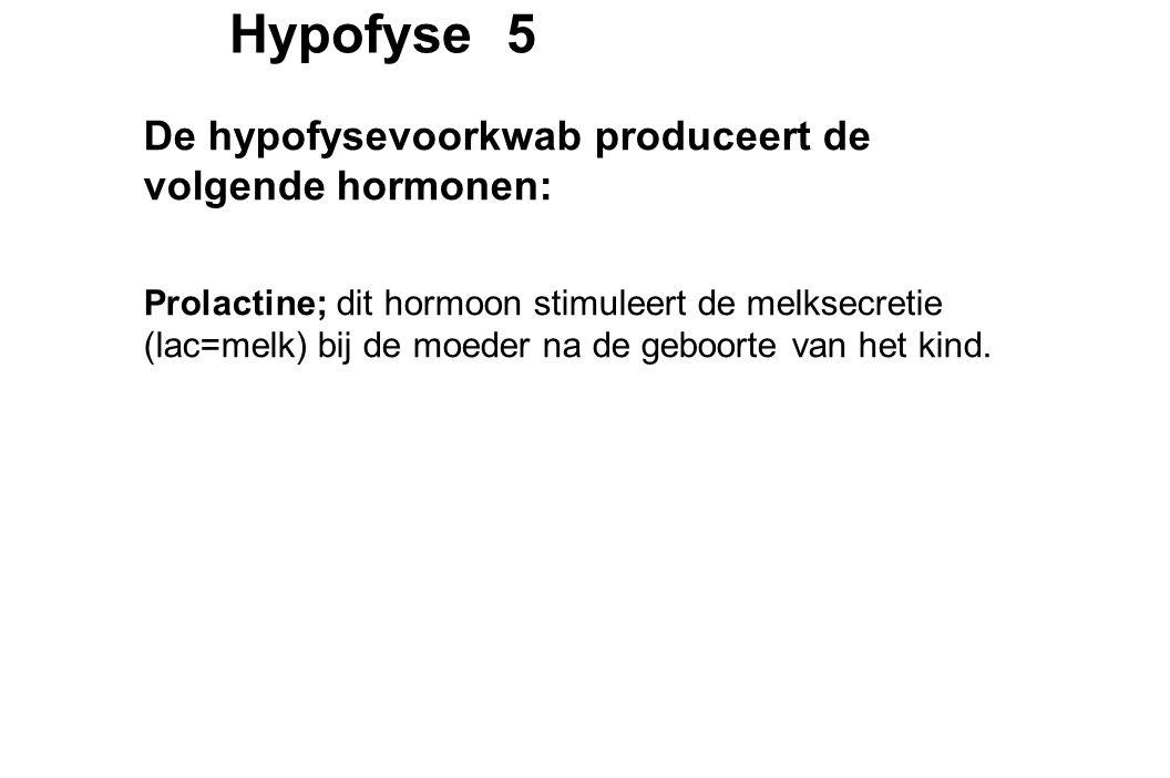 Hypofyse 5 De hypofysevoorkwab produceert de volgende hormonen: Prolactine; dit hormoon stimuleert de melksecretie (lac=melk) bij de moeder na de geboorte van het kind.