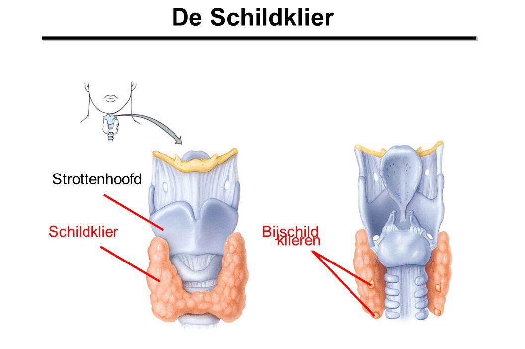 Strottenhoofd Schildklier Bijschild klieren De Schildklier