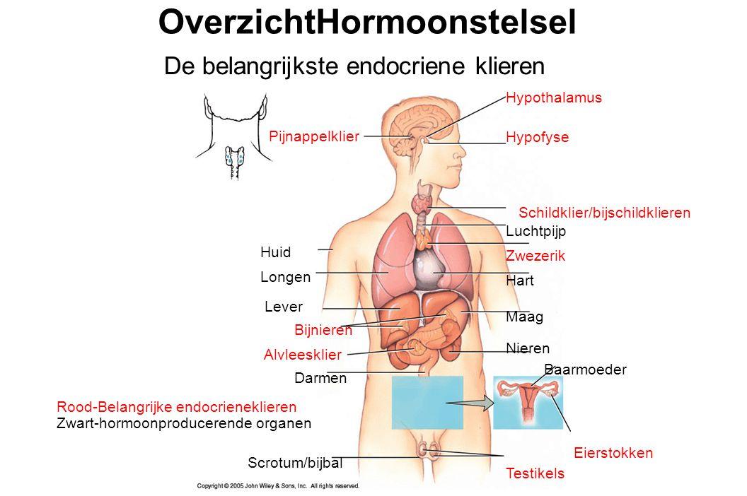 Hypothalamus Hypofyse Schildklier/bijschildklieren Luchtpijp Zwezerik Hart Maag Nieren Baarmoeder Eierstokken Testikels Pijnappelklier Huid Longen Lever Bijnieren Alvleesklier Darmen Rood-Belangrijke endocrieneklieren Zwart-hormoonproducerende organen Scrotum/bijbal OverzichtHormoonstelsel De belangrijkste endocriene klieren