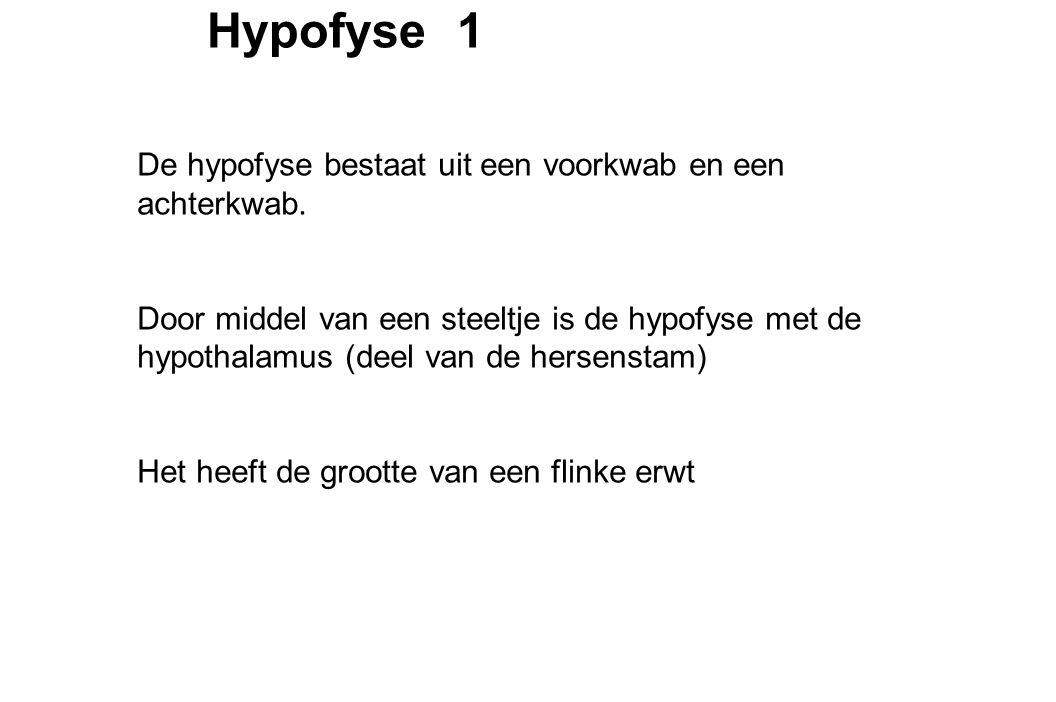Hypofyse 1 De hypofyse bestaat uit een voorkwab en een achterkwab.