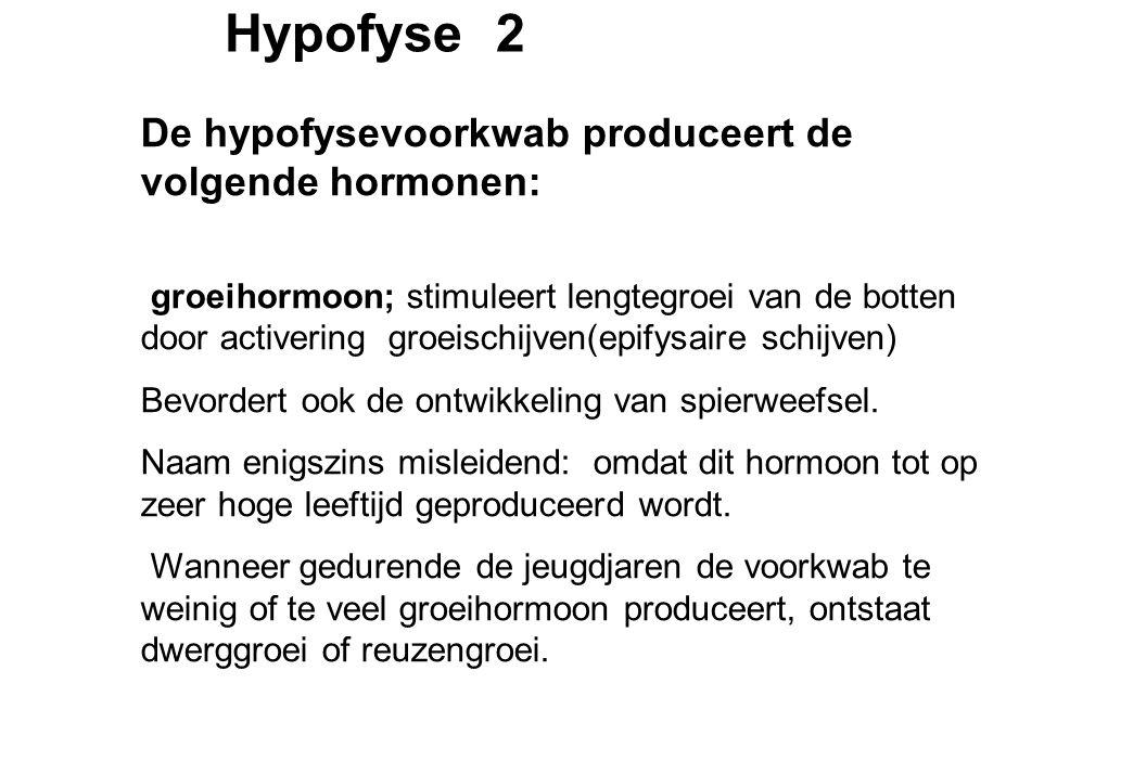 Hypofyse 2 De hypofysevoorkwab produceert de volgende hormonen: groeihormoon; stimuleert lengtegroei van de botten door activering groeischijven(epifysaire schijven) Bevordert ook de ontwikkeling van spierweefsel.