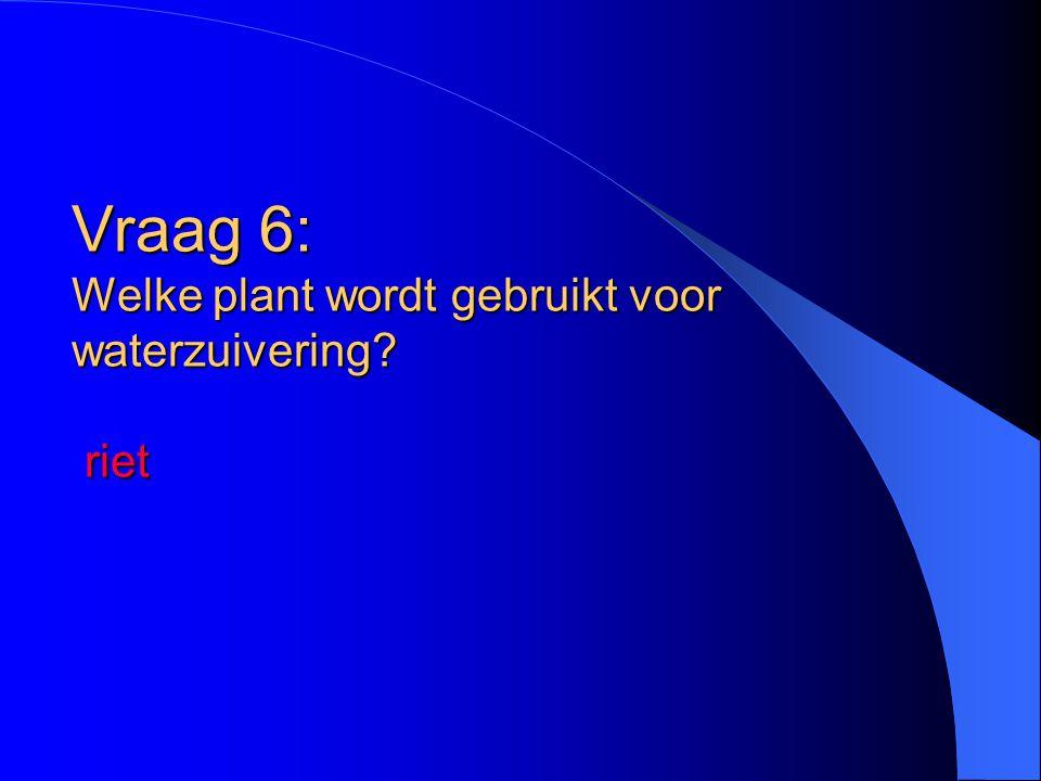 Vraag 6: Welke plant wordt gebruikt voor waterzuivering? riet
