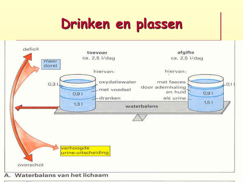 Percentage water in ons lichaam