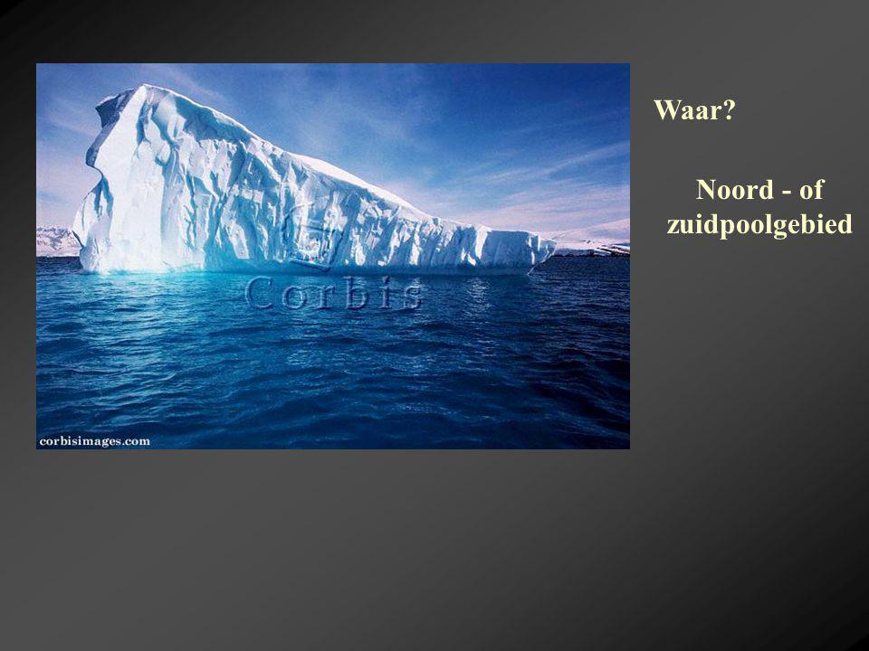 Waar? Noord - of zuidpoolgebied