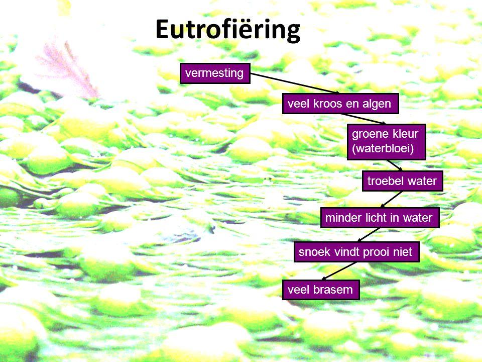 vermesting veel kroos en algen minder licht in water groene kleur (waterbloei) troebel water snoek vindt prooi niet veel brasem Eutrofiëring