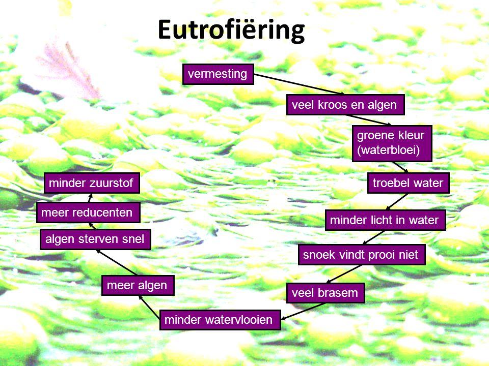 vermesting veel kroos en algen minder licht in water groene kleur (waterbloei) troebel water algen sterven snel snoek vindt prooi niet veel brasem minder watervlooien meer algen meer reducenten minder zuurstof dieren sterven Eutrofiëring