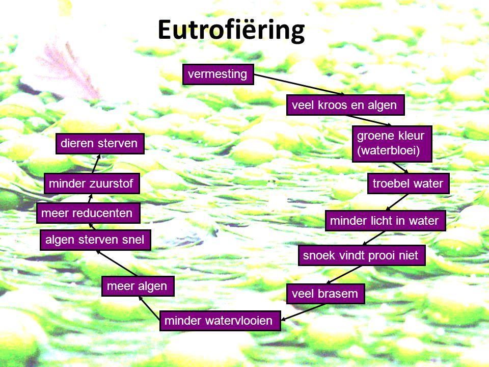 vermesting veel kroos en algen minder licht in water groene kleur (waterbloei) troebel water algen sterven snel snoek vindt prooi niet veel brasem minder watervlooien meer algen meer reducenten minder zuurstof dieren sterven meer reducenten Eutrofiëring