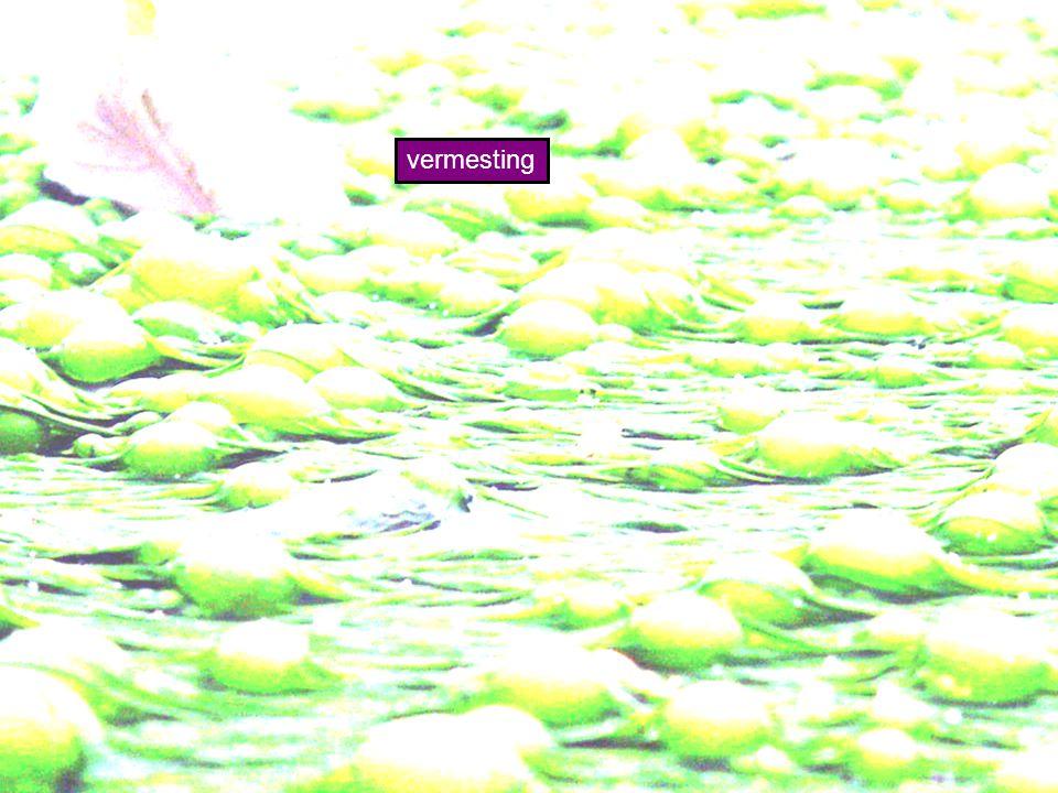 vermesting