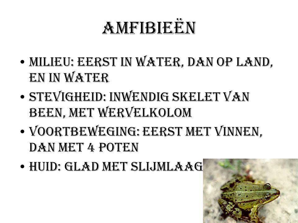 Amfibieën Milieu: Eerst in water, dan op land, en in water Stevigheid: Inwendig skelet van been, met wervelkolom Voortbeweging: eerst met vinnen, dan