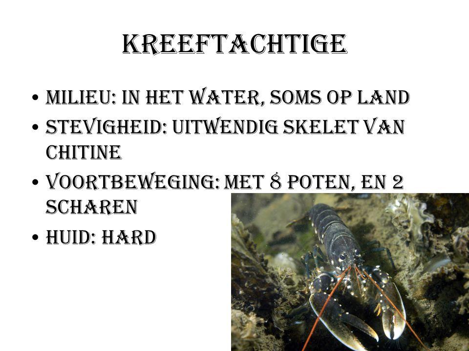 Kreeftachtige Milieu: In het water, soms op land Stevigheid: Uitwendig skelet van chitine Voortbeweging: met 8 poten, en 2 scharen Huid: hard