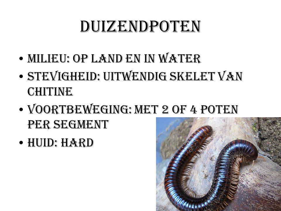 Duizendpoten Milieu: Op land en in water Stevigheid: Uitwendig skelet van chitine Voortbeweging: met 2 of 4 poten per segment Huid: hard