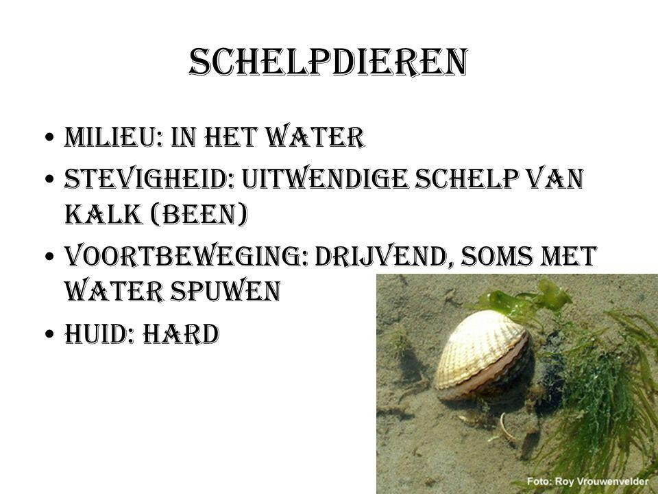 Schelpdieren Milieu: In het water Stevigheid: uitwendige schelp van kalk (been) Voortbeweging: Drijvend, soms met water spuwen Huid: hard