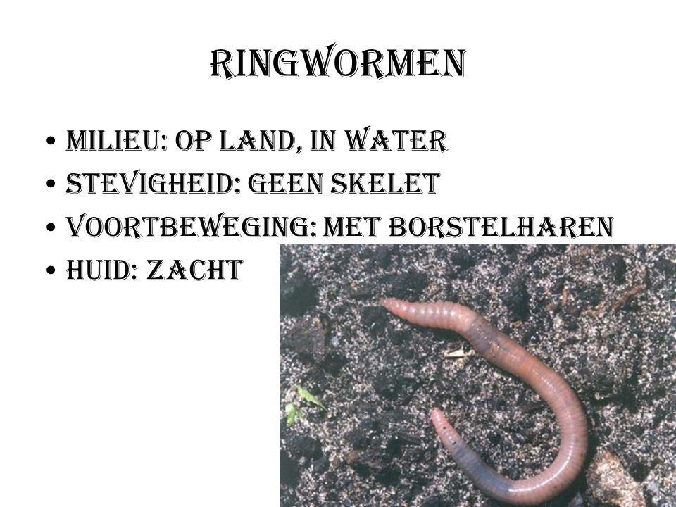 Ringwormen Milieu: Op land, in water Stevigheid: Geen skelet Voortbeweging: Met borstelharen Huid: Zacht
