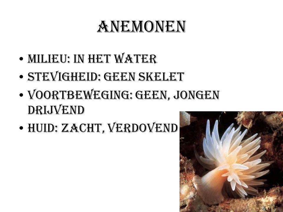 Anemonen Milieu: In het water Stevigheid: Geen skelet Voortbeweging: geen, jongen drijvend Huid: zacht, verdovend