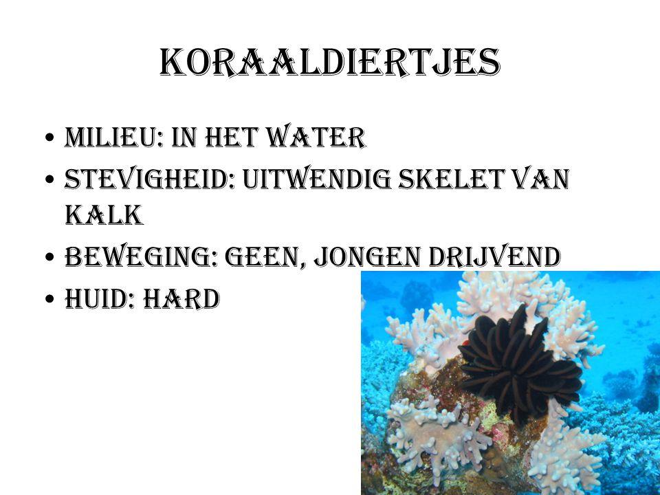 Koraaldiertjes Milieu: In het water Stevigheid: Uitwendig skelet van kalk Beweging: geen, jongen drijvend Huid: hard