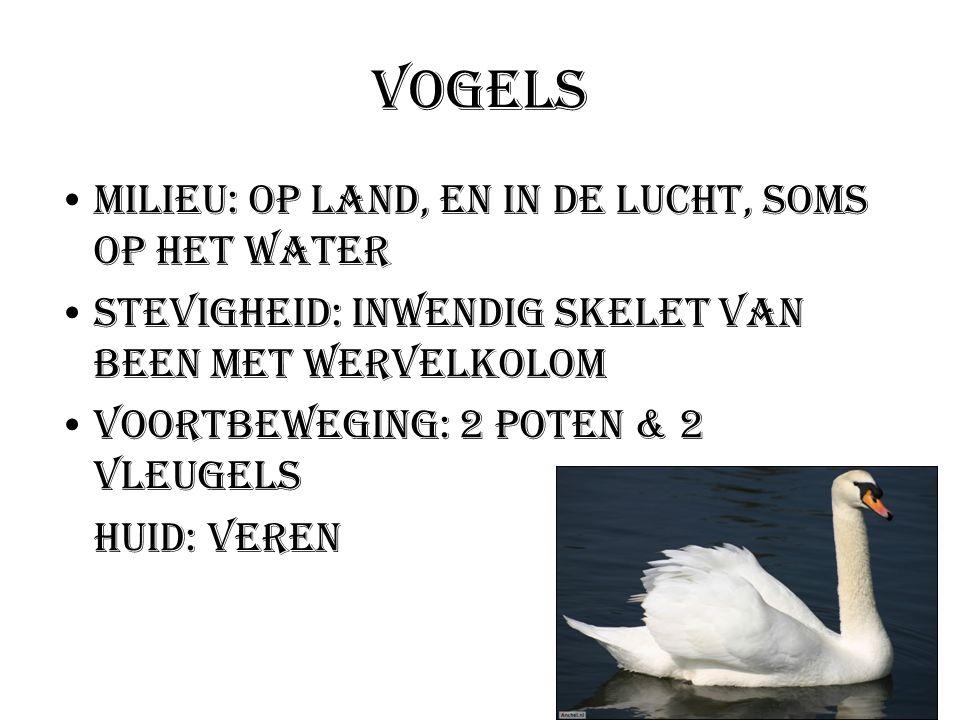 Vogels Milieu: Op land, en in de lucht, soms op het water Stevigheid: Inwendig skelet van been met wervelkolom Voortbeweging: 2 poten & 2 vleugels Hui