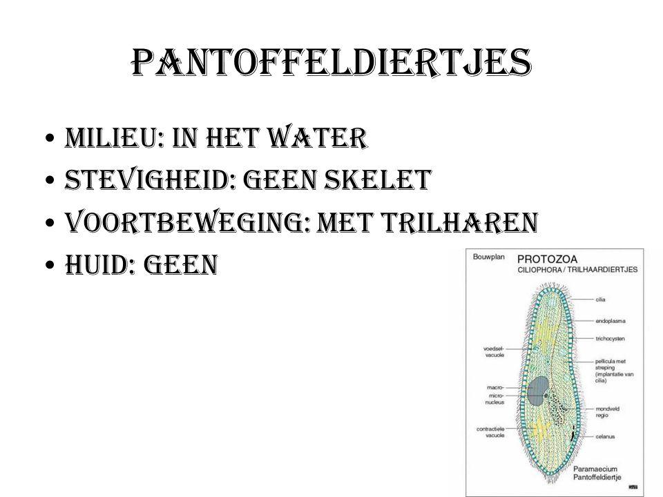 Pantoffeldiertjes Milieu: In het water Stevigheid: Geen skelet Voortbeweging: Met trilharen Huid: geen