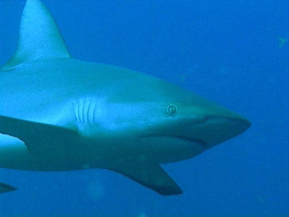 Vissen Milieu: In het water Voortbeweging: met vinnen Stevigheid: Inwendig skelet van been, met wervelkolom Huid: Schubben met slijm