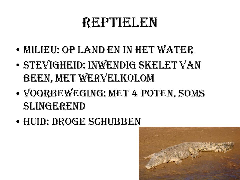 Reptielen Milieu: Op land en in het water Stevigheid: Inwendig skelet van been, met wervelkolom Voorbeweging: Met 4 poten, soms slingerend Huid: droge
