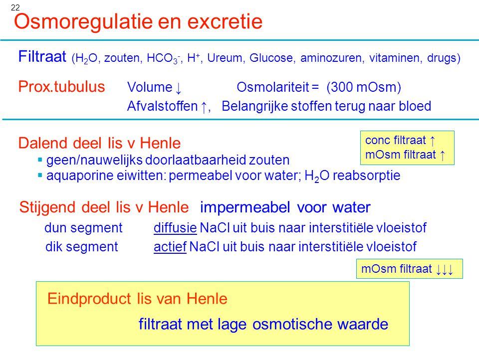 22 Osmoregulatie en excretie Filtraat (H 2 O, zouten, HCO 3 -, H +, Ureum, Glucose, aminozuren, vitaminen, drugs) Prox.tubulus Volume ↓Osmolariteit =