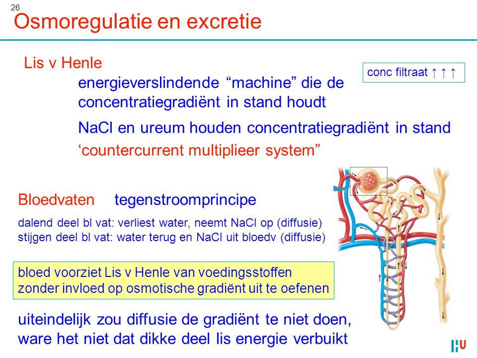 """26 Osmoregulatie en excretie Lis v Henle conc filtraat ↑ ↑ ↑ energieverslindende """"machine"""" die de concentratiegradiënt in stand houdt NaCl en ureum ho"""