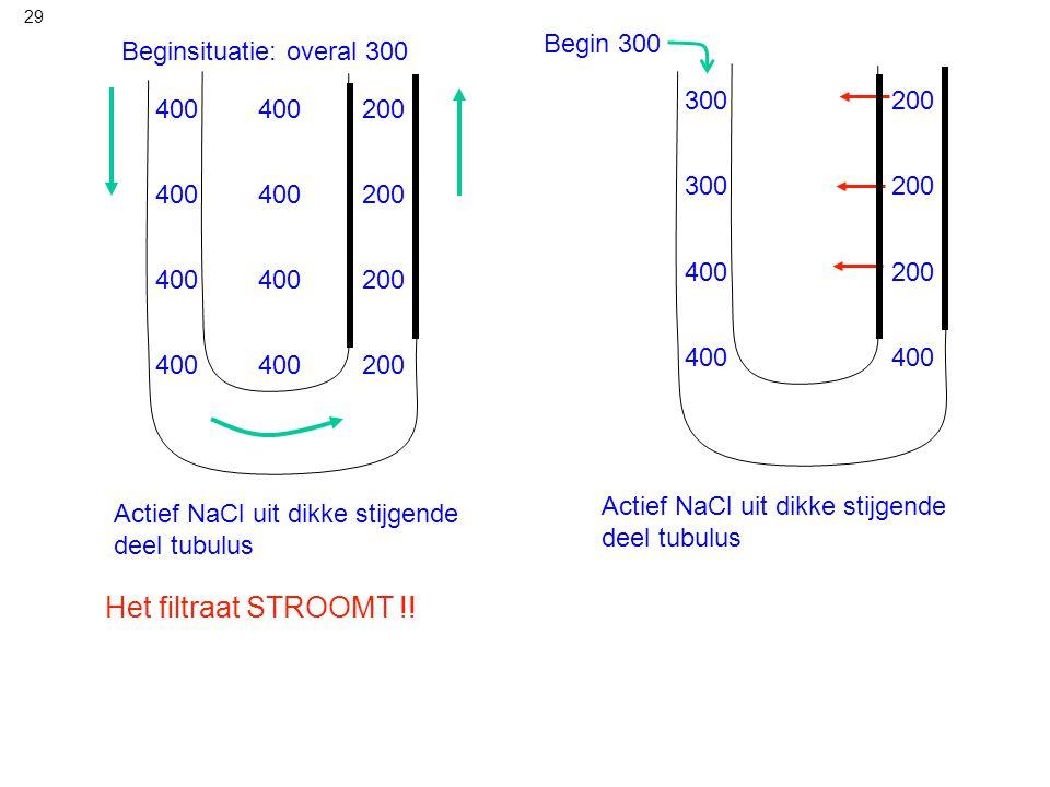 29 Begin 300 Actief NaCl uit dikke stijgende deel tubulus 300 200 400 300 400 Beginsituatie: overal 300 Actief NaCl uit dikke stijgende deel tubulus 4