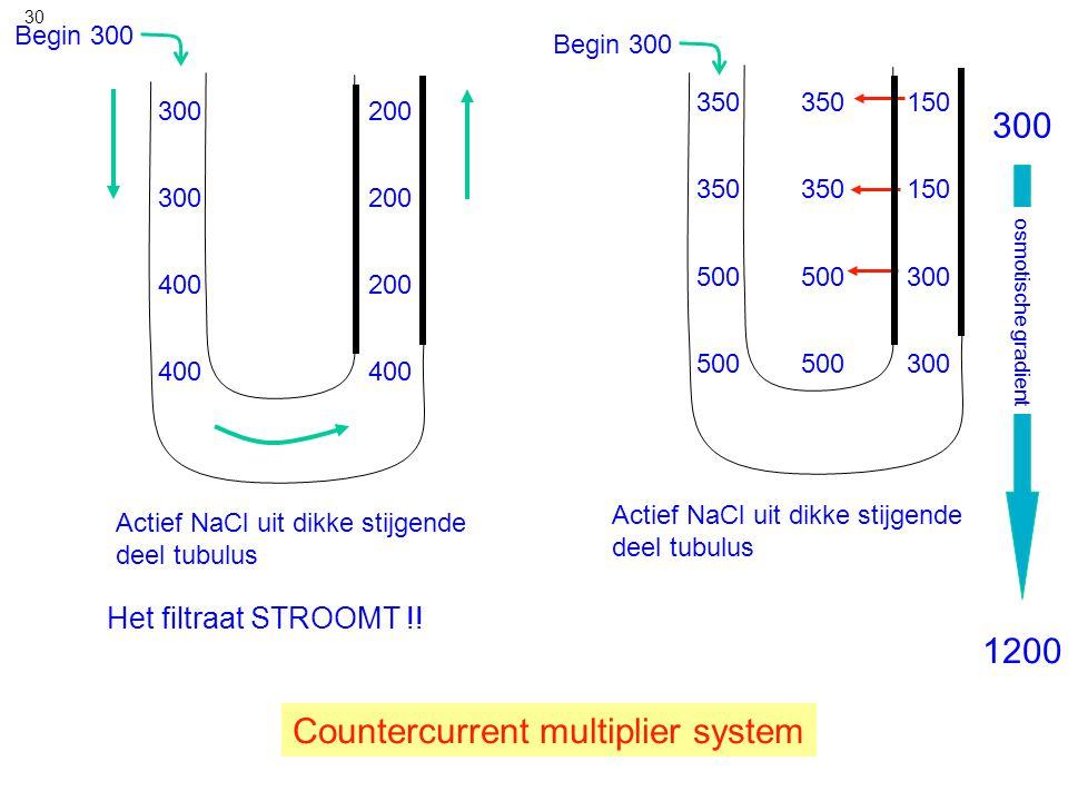 30 Begin 300 350 150 300 350 500 Actief NaCl uit dikke stijgende deel tubulus 300 200 400 300 400 Het filtraat STROOMT !! Countercurrent multiplier sy