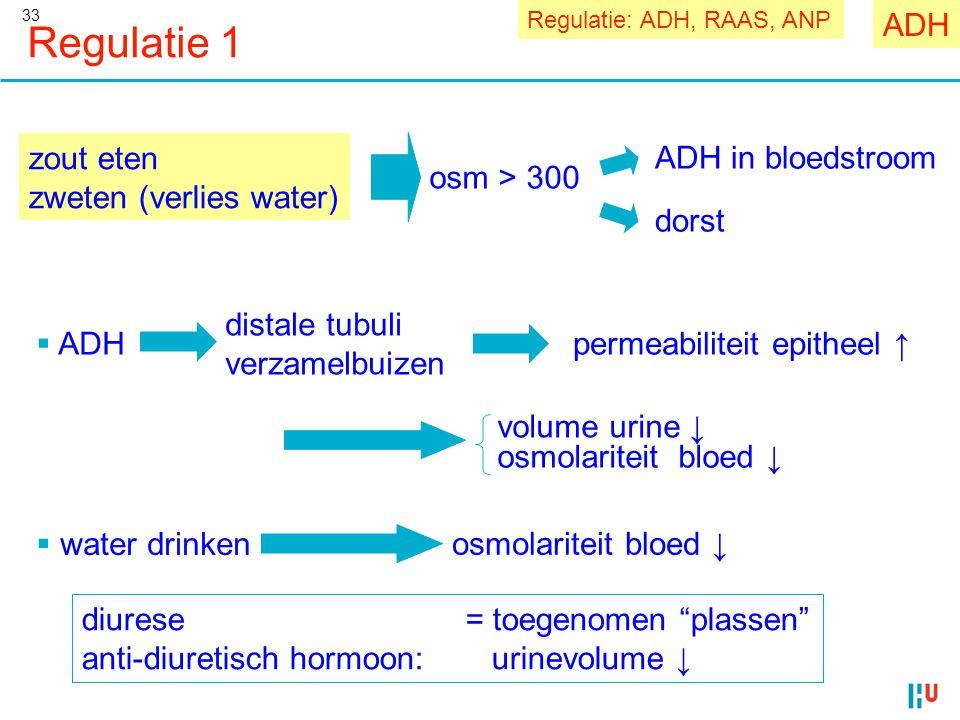 """33 Regulatie 1 zout eten zweten (verlies water) diurese = toegenomen """"plassen"""" anti-diuretisch hormoon: urinevolume ↓ osm > 300 ADH in bloedstroom dor"""