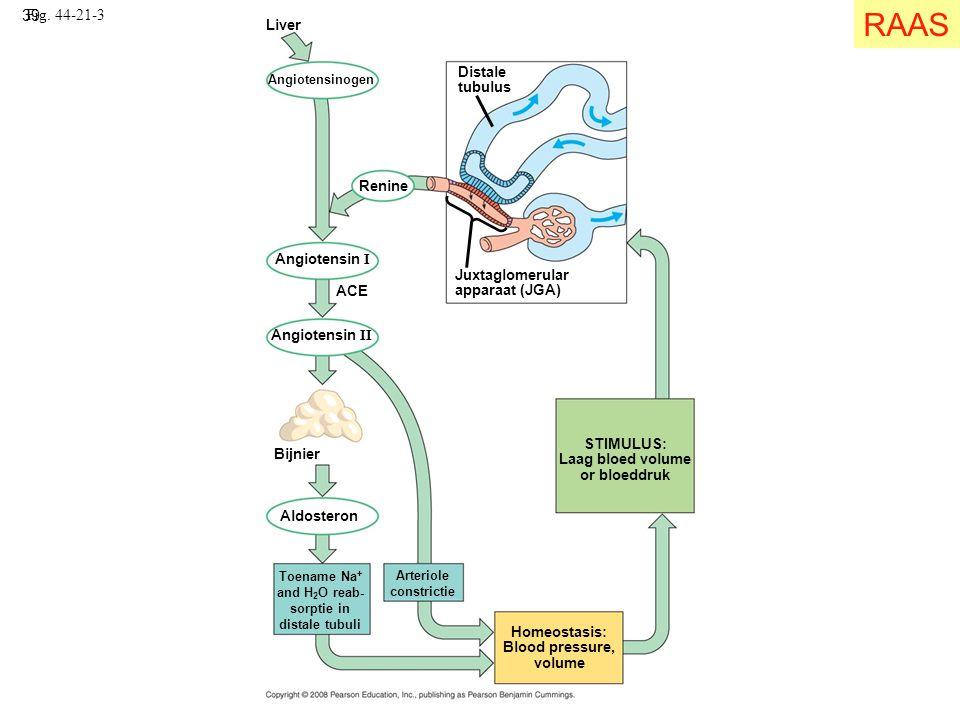 39 Fig. 44-21-3 Homeostasis: Blood pressure, volume Liver Angiotensinogen Angiotensin I ACE Angiotensin II Bijnier Aldosteron Arteriole constrictie To