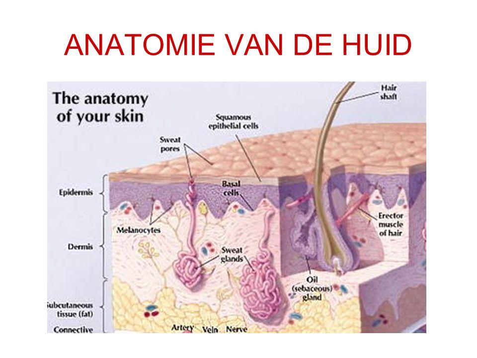 ZALVEN EN CRÈMES ZoneCrèmeZalfLotion Hand of voet5 g7,5 g20 ml Arm20 g30 g60 ml Been40 g60 g120 ml Borst80 g120 g250 ml Genitaliën5 g3,5 g/ Gezicht10 g15 g25 ml Lichaam250 g350 g650 ml Indicatieve hoeveelheden voor een dermatologische behandeling (2 aanwendingen per dag, gedurende 1 week)
