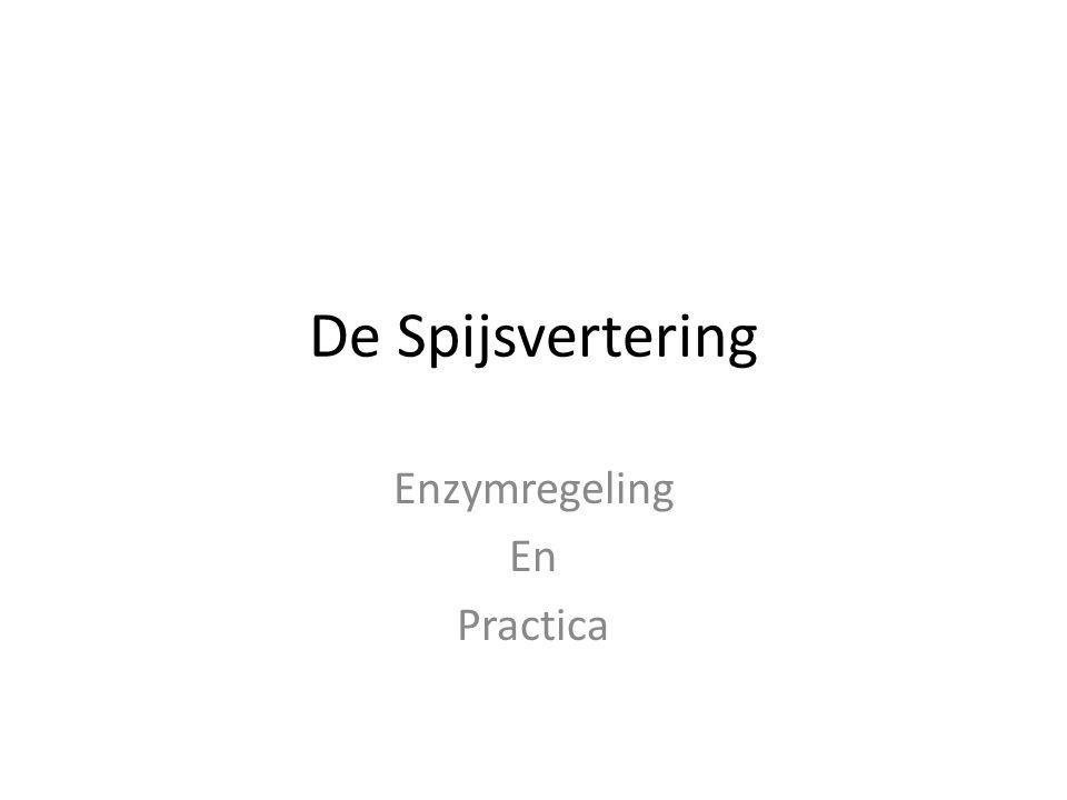 De Spijsvertering Enzymregeling En Practica