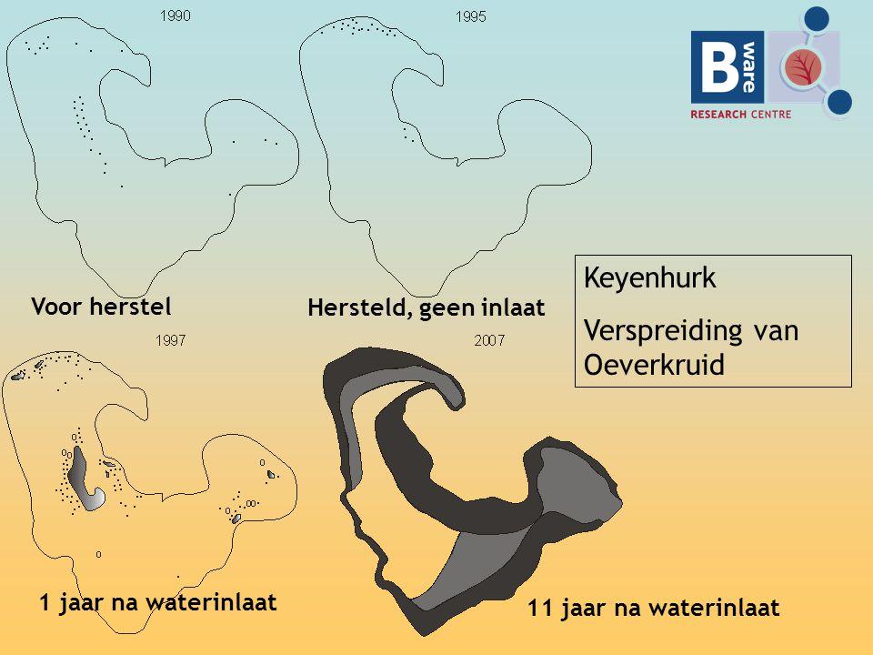 Keyenhurk Verspreiding van Oeverkruid Voor herstel Hersteld, geen inlaat 1 jaar na waterinlaat 11 jaar na waterinlaat