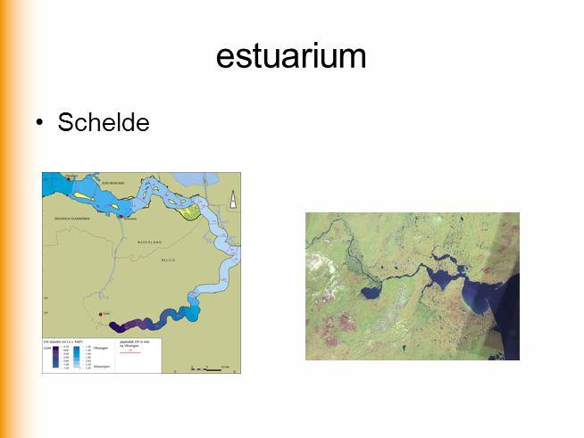 estuarium Schelde
