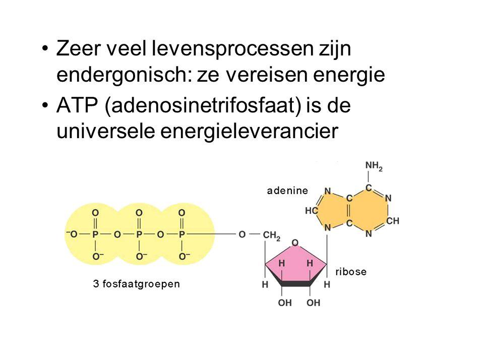 Zeer veel levensprocessen zijn endergonisch: ze vereisen energie ATP (adenosinetrifosfaat) is de universele energieleverancier