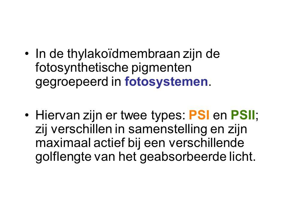 In de thylakoïdmembraan zijn de fotosynthetische pigmenten gegroepeerd in fotosystemen. Hiervan zijn er twee types: PSI en PSII; zij verschillen in sa