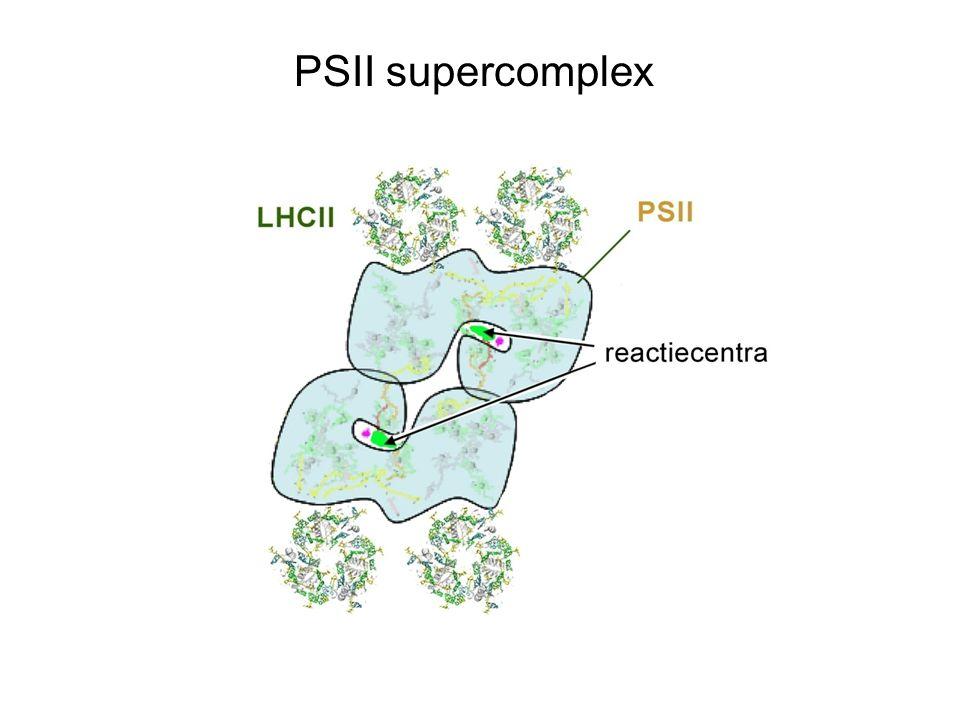 PSII supercomplex