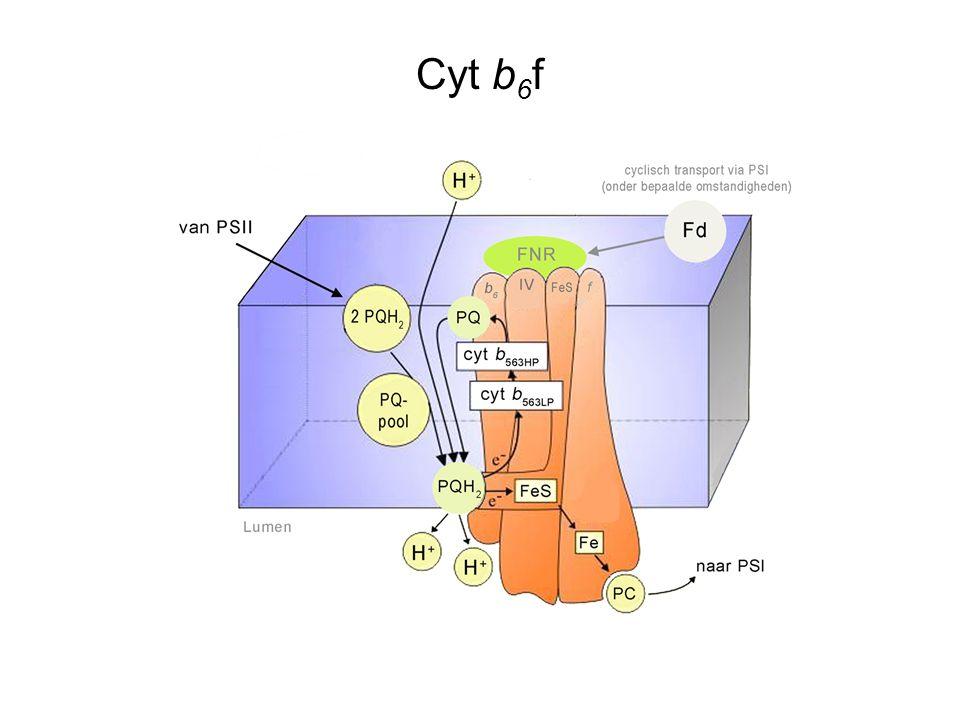 Cyt b 6 f