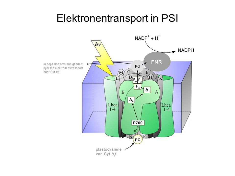Elektronentransport in PSI