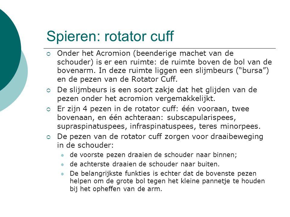 Spieren: rotator cuff  Onder het Acromion (beenderige machet van de schouder) is er een ruimte: de ruimte boven de bol van de bovenarm. In deze ruimt