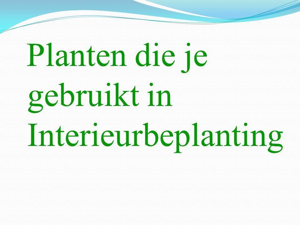 Planten die je gebruikt in Interieurbeplanting