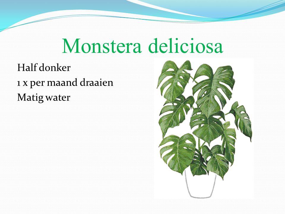 Monstera deliciosa Half donker 1 x per maand draaien Matig water