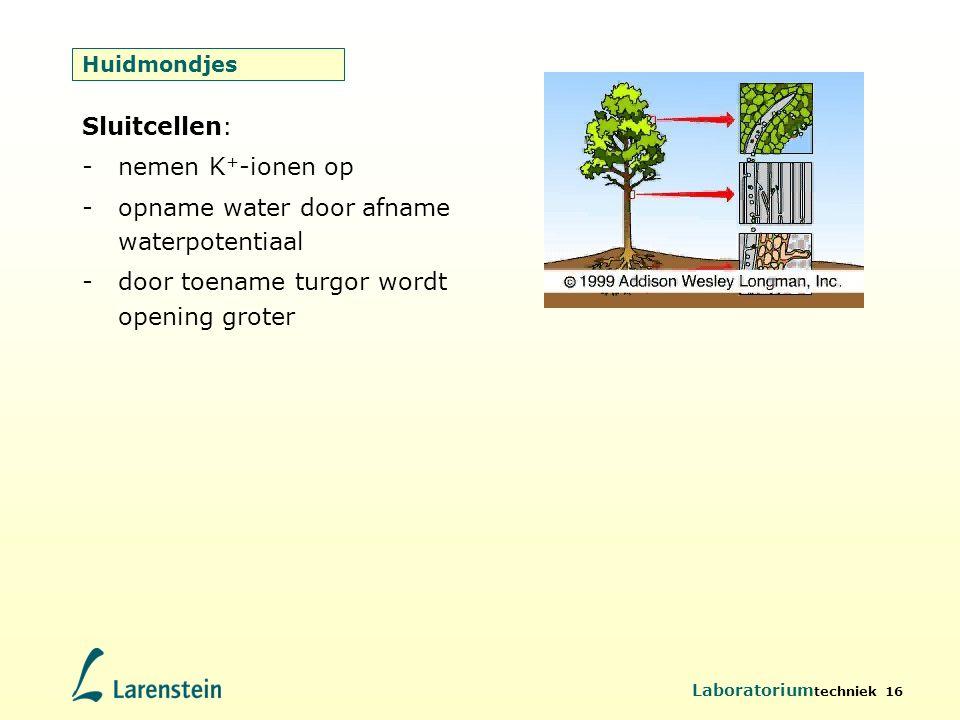 Laboratorium techniek 16 Huidmondjes Sluitcellen: -nemen K + -ionen op -opname water door afname waterpotentiaal -door toename turgor wordt opening gr