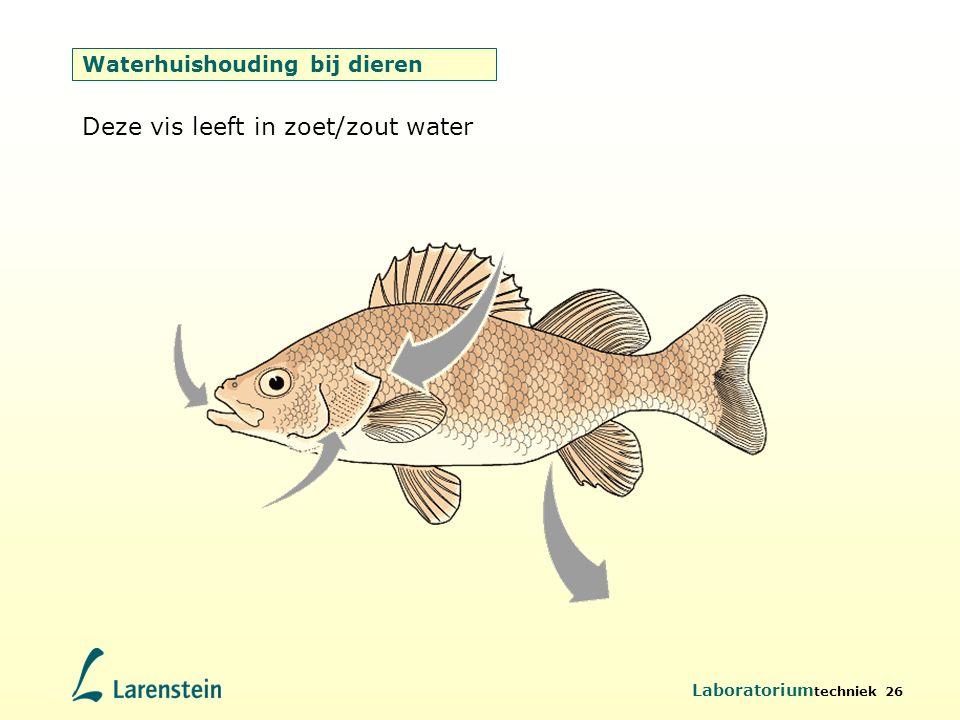 Laboratorium techniek 26 Waterhuishouding bij dieren Deze vis leeft in zoet/zout water
